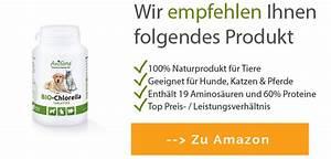 Algen Dünger Kaufen : chlorella algen kaufen amazon ~ Whattoseeinmadrid.com Haus und Dekorationen