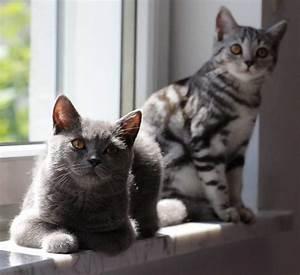 Was Muss Ich Bei Einem Hauskauf Beachten : katzen erziehen wie und was mu ich beachten ~ Markanthonyermac.com Haus und Dekorationen