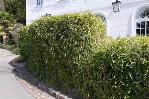 Welche Pflanzen Als Sichtschutz : bambushecken sorten und pflanzabstand bambus und pflanzenshop ~ Markanthonyermac.com Haus und Dekorationen