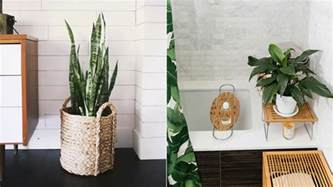the 10 best bathroom plants that thrive in high humidity areas