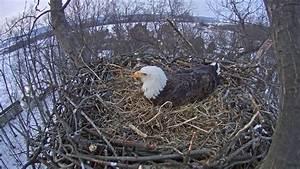 2015 - Hanover Pennsylvania Bald Eagle Nest Cam Clip ...