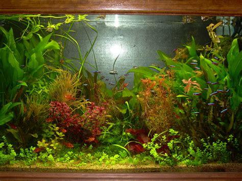 plante aquarium eau douce sans substrat