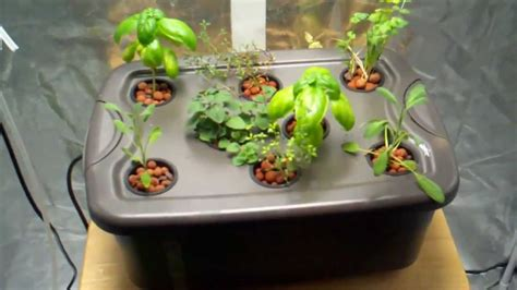 Hydroponic Herb Garden Build A Hydroponic Herb Garden For