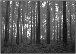 Schwarz Weiß Kontrast : schwarz weiss wald von alberts fotografie galerie heise foto ~ Markanthonyermac.com Haus und Dekorationen