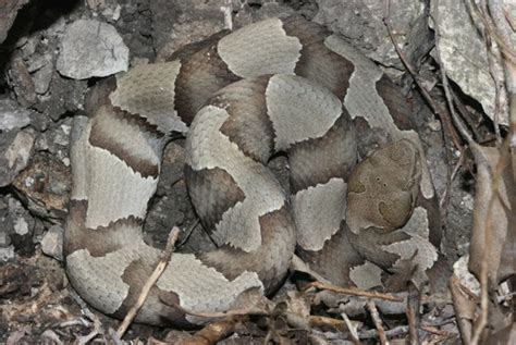 insects in the city save that skin snake sheds can be