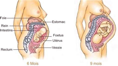 changement du corps de la m 232 re l ut 233 rus semaines grossesse