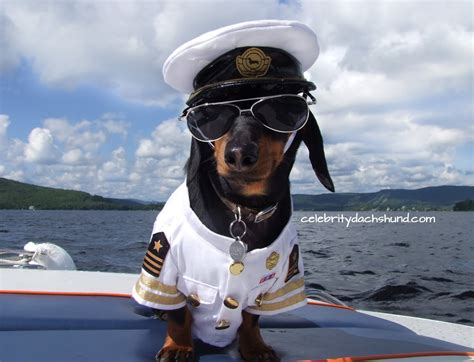 Dog Boat Captain by Dachshunds On A Boat Quot Babe Watchin With Captain Crusoe