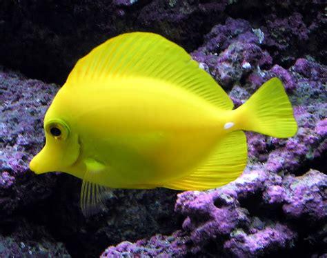 tropical freshwater aquarium fish pictures just for