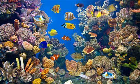 poisson nettoyeur aquarium images