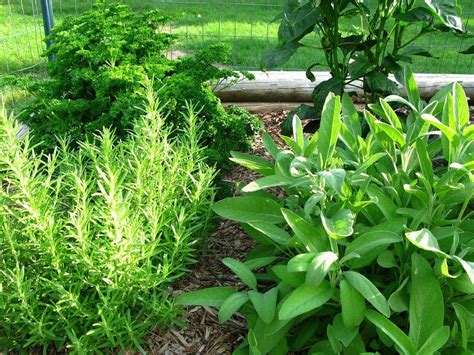 Garden Types : Types Of Common Garden Herbs