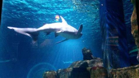 aquarium sea val d europe picture of aquarium sea val d europe marne la