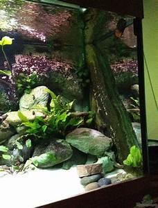 Pflanzen Zu Hause : aquarium von thomas nohr 16610 tanganjika zu hause ~ Markanthonyermac.com Haus und Dekorationen