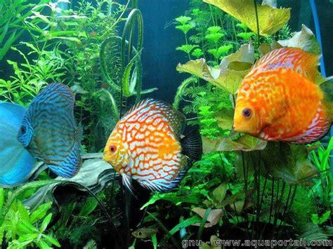 aquarium 40 233 conomies pour rendre l aquariophilie moins ch 232 re