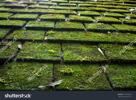 Old Roof Tiles Covered Green Moss Stock Photo 199933283 Heat Cables For Roof Ice Dams Ryan Roofing Kansas City Mo Red Inn Maple Drive Cool Systems San Marcos Installing Rolled Over Shingles Pitch Degrees Metric Aluminum Coil Nails Dayton Ohio North