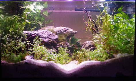 aquarium eau douce 70l