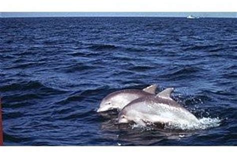 Virginia Aquarium Dolphin Watching Boat Trips by 1000 Images About Loving Virginia Beach N Norfolk
