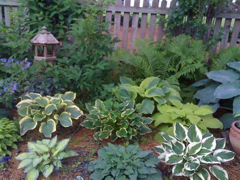 Minnesota Perennial Garden Plans 45 best images about perennials minnesota hardy on