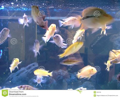 poissons d aquarium photo libre de droits image 222135