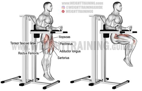 captain s chair leg raise exercise guide and weight guide