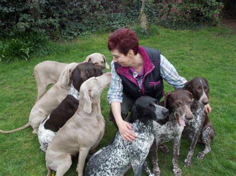 lab vs german shorthair breeds picture