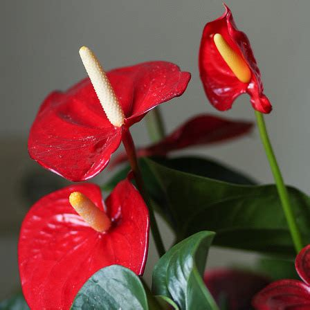 plante fleurie d int 233 rieur liste ooreka