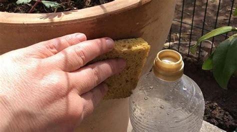 le truc tout simple pour nettoyer un pot de fleurs tach 233 en terre cuite