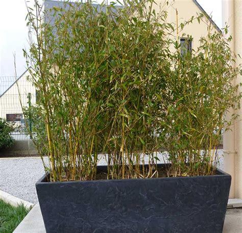les bambous d exterieur inspirations desjardins