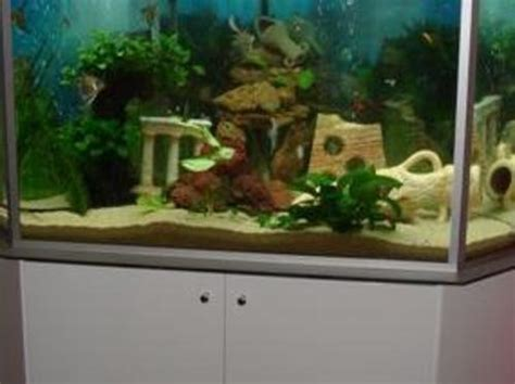 comment bien d 233 marrer un aquarium d eau douce
