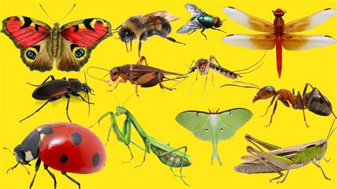 Spotlight Pic Of Insects Top 10 Most Annoying Youtube #18032