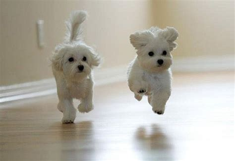 Cutest Puppies in the World   Pictures   Pets World