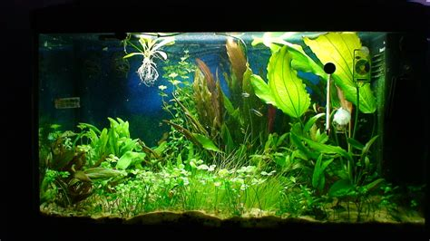 120 litre planted aquarium journal uk aquatic plant society
