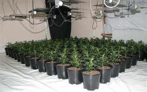 une culture de cannabis d 233 couverte gr 226 ce 224 une fuite d eau dans un appartement vide