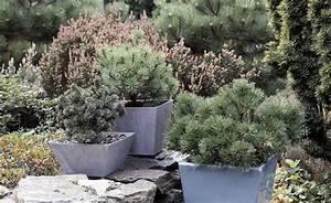 Immergrüne Winterharte Kübelpflanzen : die besten 25 k belpflanzen winterhart ideen auf pinterest winterhart balkon pflanzen ~ Markanthonyermac.com Haus und Dekorationen