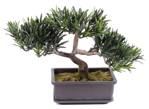 arbre artificiel miniature bonsa 239 podocarpus en coupe plante synth 233 tique d int 233 rieur 22 cm