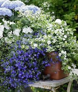 Was Bedeutet Pflegeleicht : zum nachpflanzen balkonkasten mit hortensien und lobelie living at home ~ Markanthonyermac.com Haus und Dekorationen