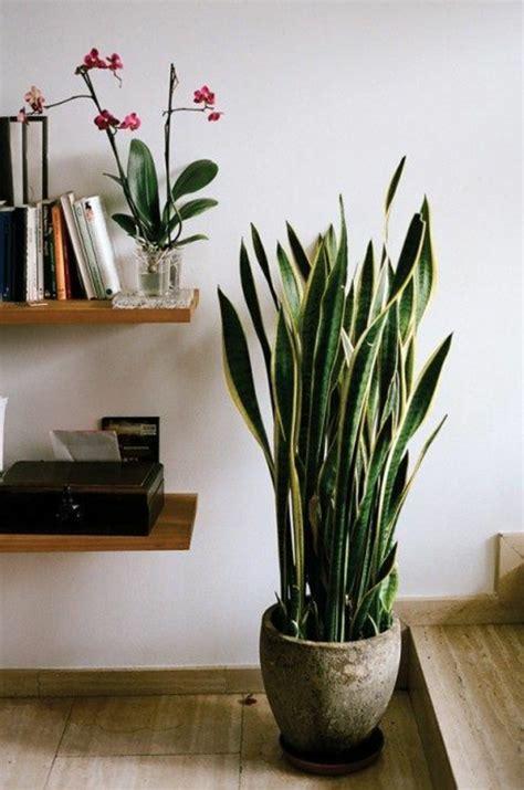 savourez la beaut 233 de la plante d int 233 rieur dans notre galerie