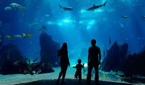new aquarium boston family with fish