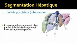 Foie Et Segmentation Hépatique - YouTube
