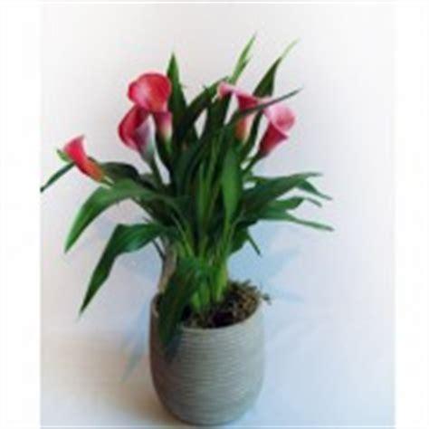 plantes plantes vertes et plante grasse meersseman fleuriste tourcoing