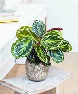 Pflanzen Die Wenig Licht Brauchen Heißen : 10 schattenpflanzen f r die dunkelsten ecken zu hause ~ Markanthonyermac.com Haus und Dekorationen