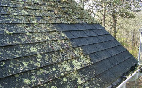 Roof Moss Prevention & Moss On Rooftops Damages Shingles Aluminum Roof Coating Coverage Retractable Systems Deck Construction Details Century Roofing Az Asphalt Flat Epdm Terracotta Tiles For Sale Moss Killer Roofs