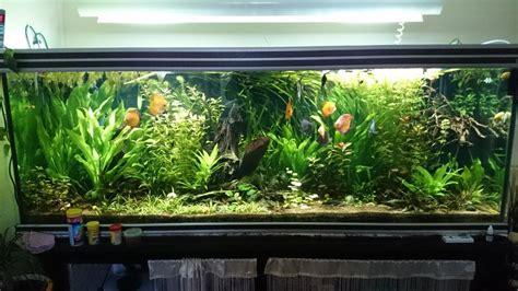 troc echange aquarium eau douce 850 litres sur troc