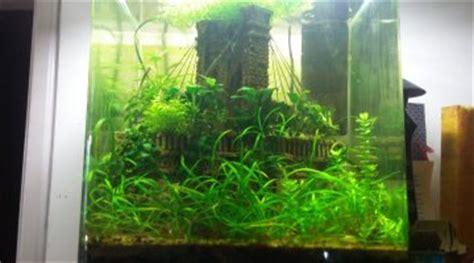 le changement de substrat dans un aquarium peupl 233 pour les nuls