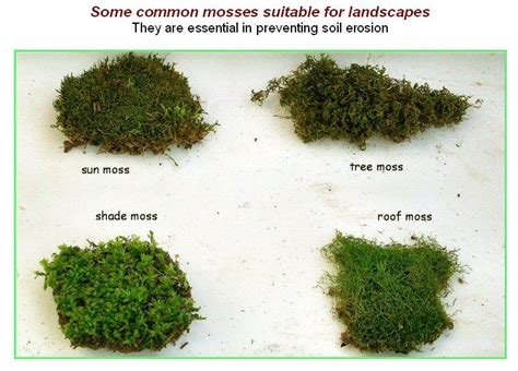 Garden Types : Types Of Moss Plants