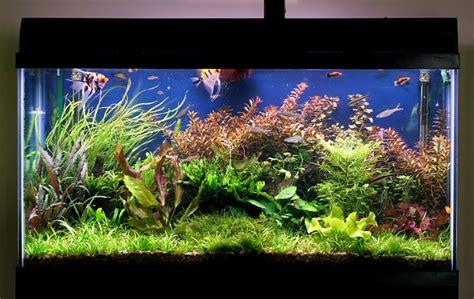 a quel rythme et dans quelles proportions faut il renouveler l eau d un aquarium d eau douce
