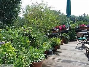 Gräser Kübel Terrasse : naschen auf dem balkon ~ Markanthonyermac.com Haus und Dekorationen