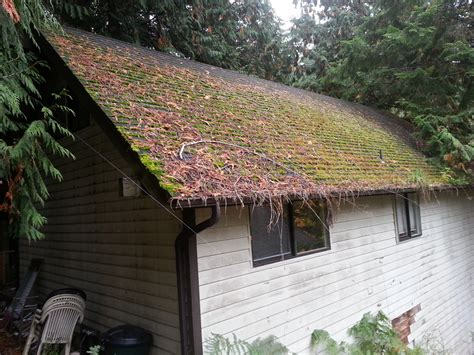 Roof Cleaning, Moss Treatment, Gutter Cleaning & Repair In