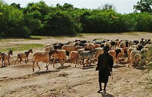 What does the future hold for pastoralists in the Sahel ...