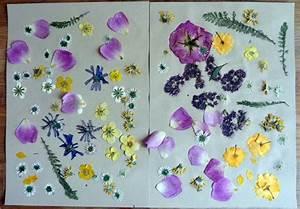 Blätter Pressen Schnell : blumen pressen so wird es gemacht mein herz sagt kunst ~ Markanthonyermac.com Haus und Dekorationen