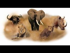 The Big 5 of Africa - YouTube